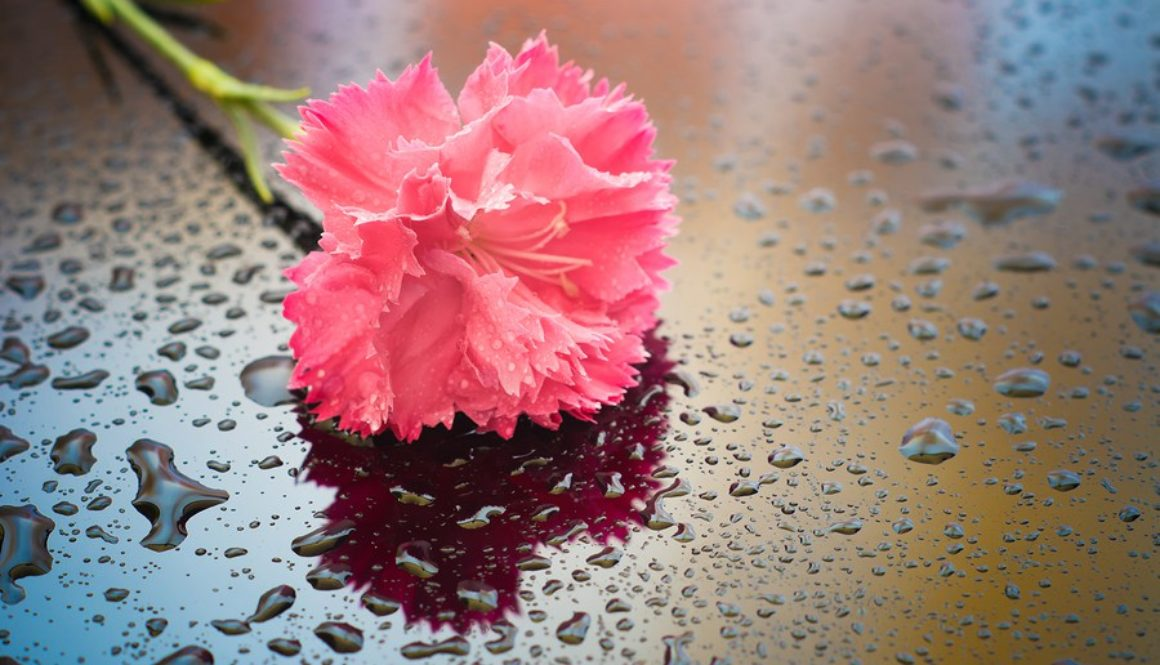 It Should Have Rained Carnations