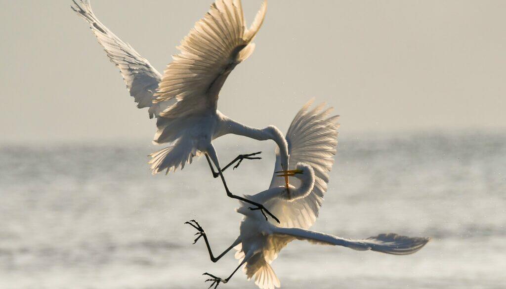 chris-sabor-qlaot0VrqTM-unsplash-1024x683fighting seagulls
